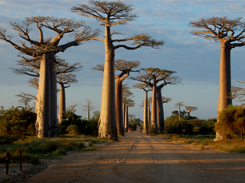Madagaskar - Flussfahrt auf Tsiribihina